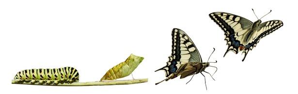 Guide_du_succes_pour_la_transformation_numerique_des_entreprises.jpg